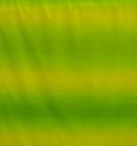 PAA1089_Green