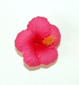 SHTAC1 Pink