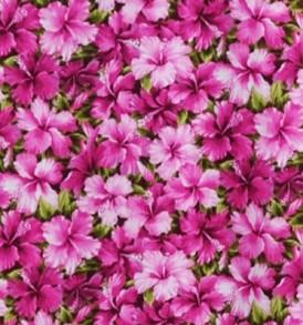 CAA0796 Pink