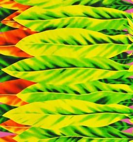 PBB2599 Fuchsia