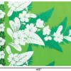 PBB2617_Green_1