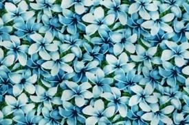 CAA0872 Turquoise