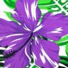 PBB2623_PurpleWhite_ZZ