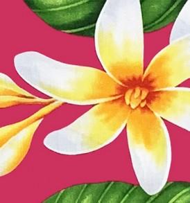 PAA1265 Fuchsia