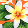 PAA1265_Orange_ZZ