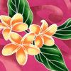 PAB0876_Fuchsia_ZZ