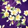 CAA0975_Purple_ZZ