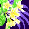 PBB2662_Purple_ZZ